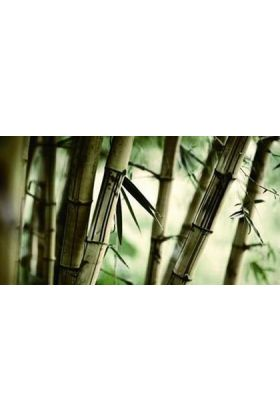 Candlecover Bamboo CC-65